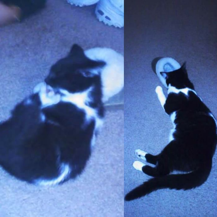 Figaro Has Gotten A Little Bigger Since The First Photo, Lol