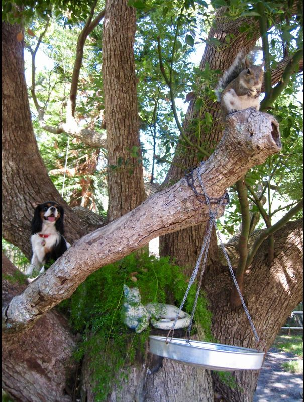My Dog Climbs Trees After Squirrels.