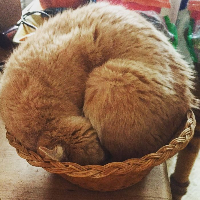 Kitty In A Basket.