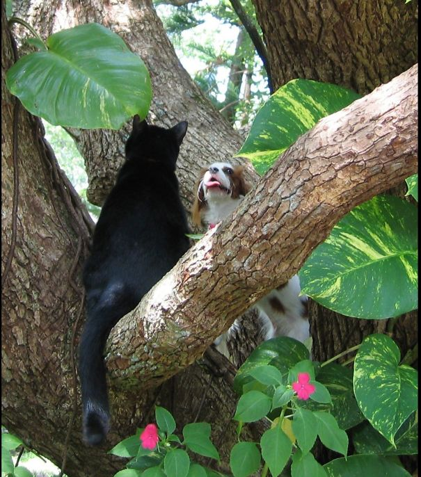 My Cat Showed My Puppy How To Climb Trees.