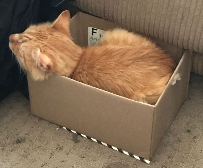 Oliver Loves A Box!