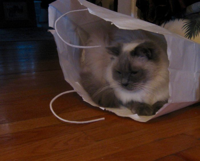 """The Cat Is """"In The Bag!!"""""""
