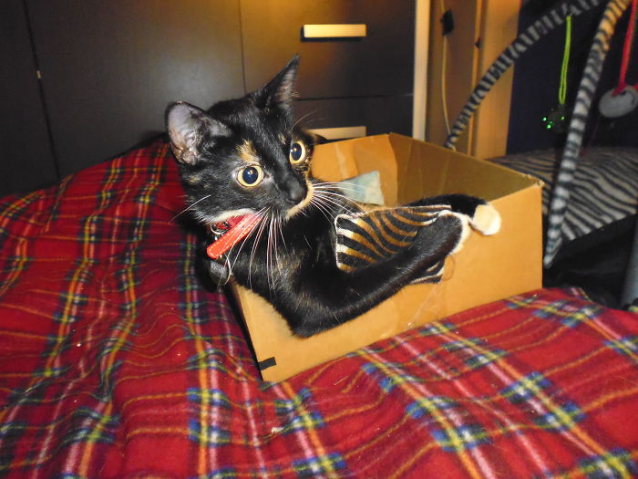 Box? Checked! Catnip Pillow? Checked! Now I Can Travel!