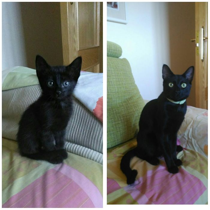 Sirius Black, From 1 Month To 1 Year