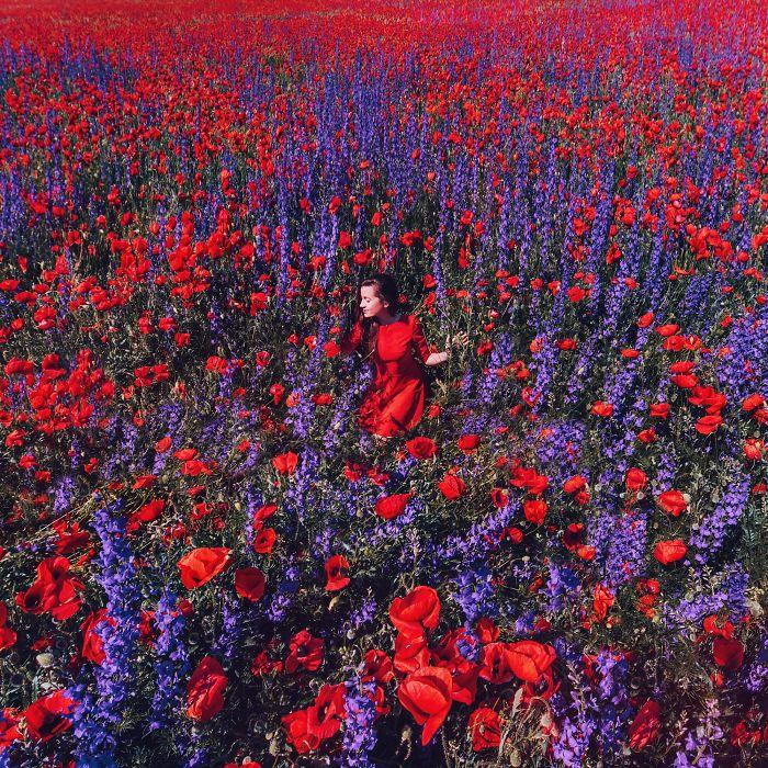 Campo de amapolas y espuelas de caballero, Crimea