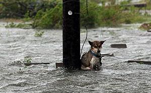 Hay personas que dejaron a sus perros atados para que murieran durante la inundación, y te romperá el corazón
