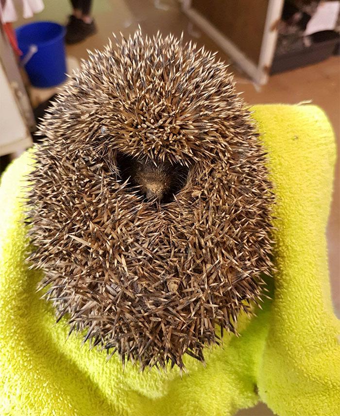 angry-hedhehog-clay-ball-3