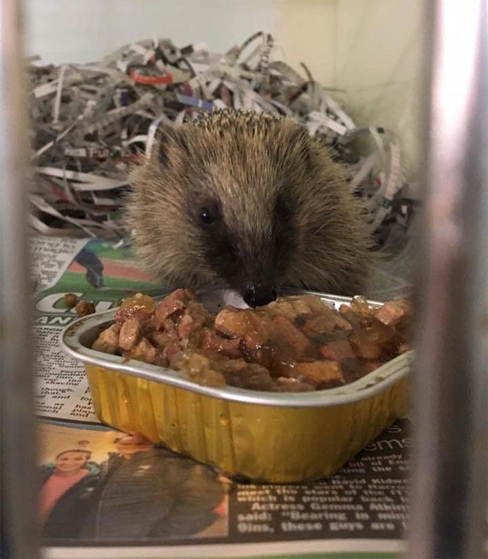 angry-hedhehog-clay-ball-4