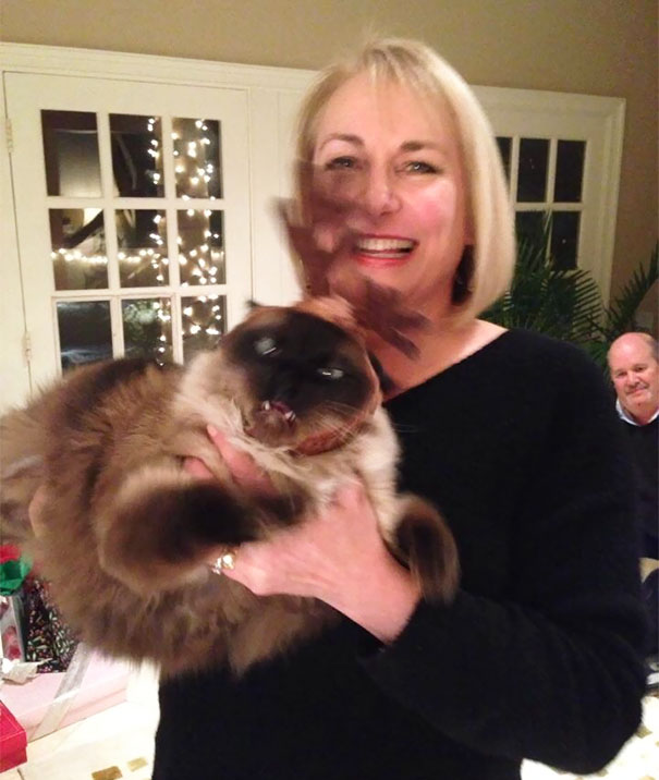 Mom Wanted A Nice Photo With Her Cat In A Reindeer Hat. Nailed It