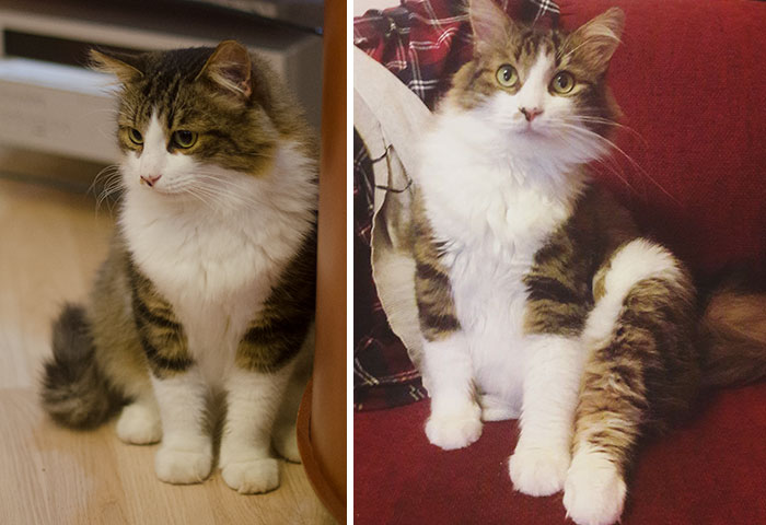 This Is Ares. We Adopted Him When He Was 1,5 Years Old. Second Picture Is Of Him Almost A Year Later