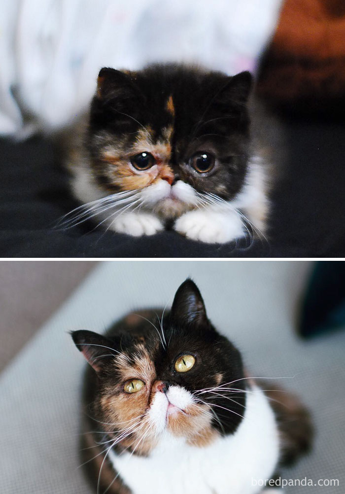Pudge, The Girl With A Moustache Then And Now