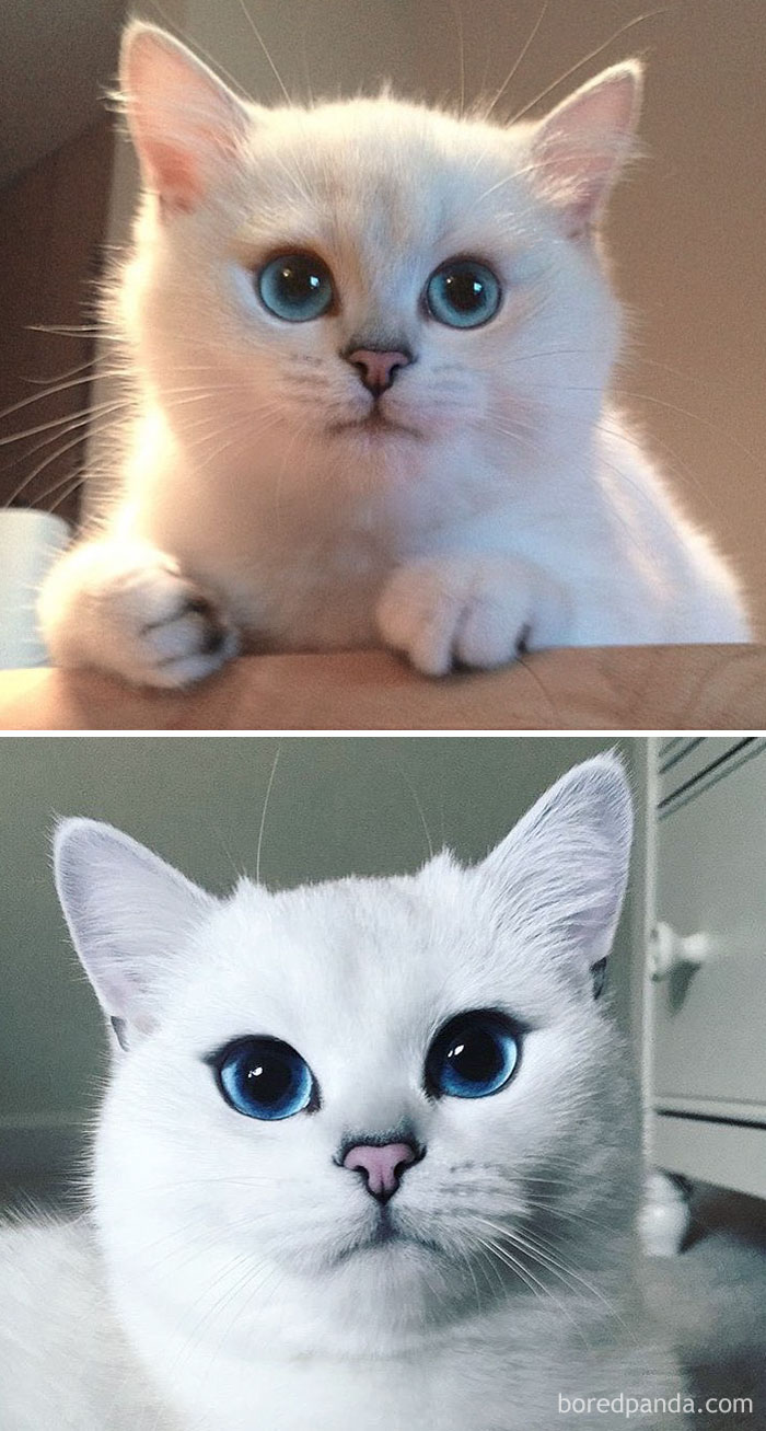Coby The Cat Then And Now