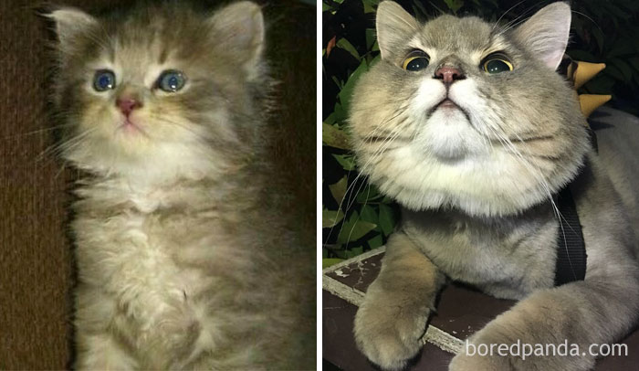 Bone Bone, The Enormous Fluffy Cat Then And Now