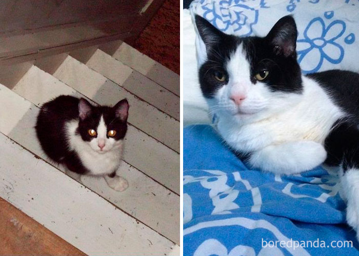 Luna – 11 Years Later