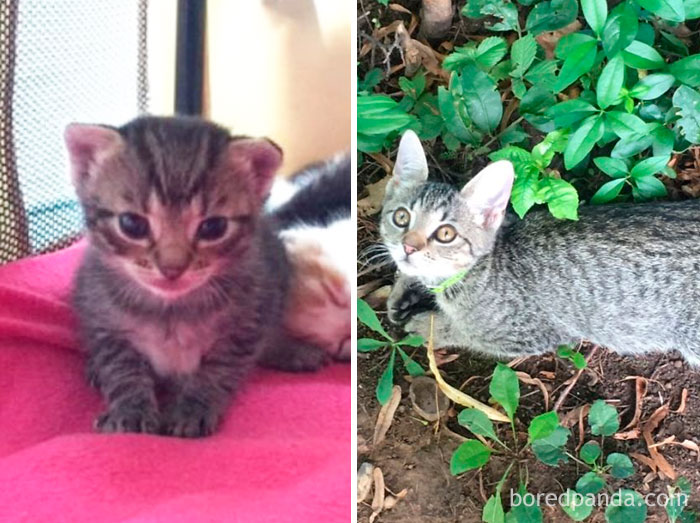 Mici Then And Now