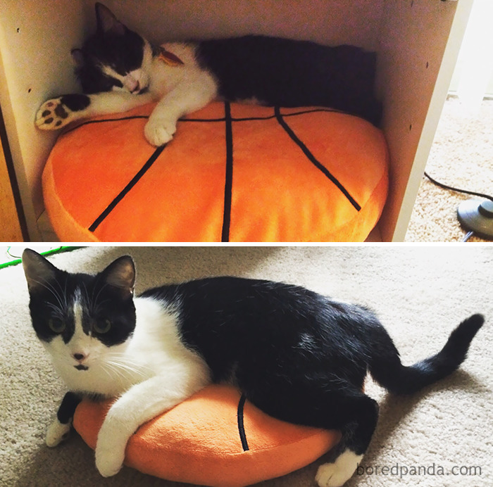 Same Pillow, One Year Later