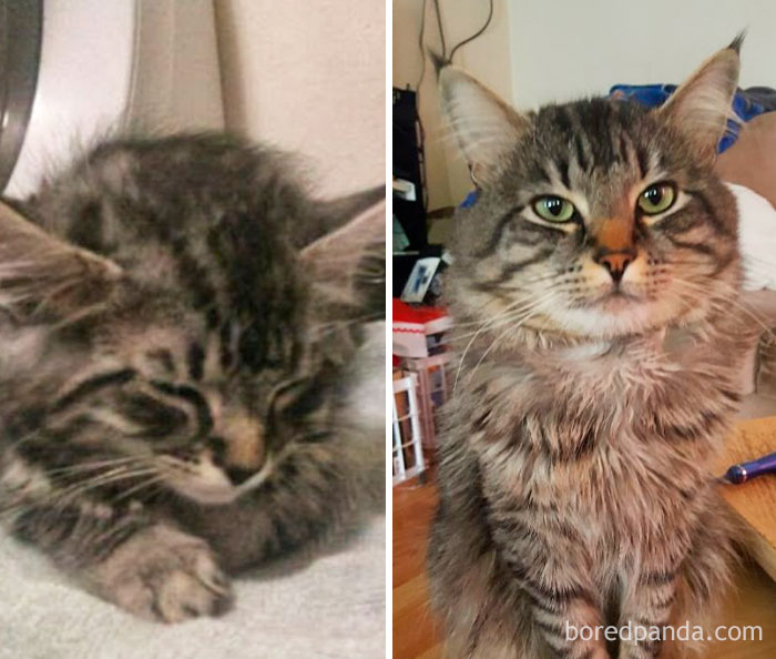 Splort The First Day We Got Him And 5 Years Later ❤