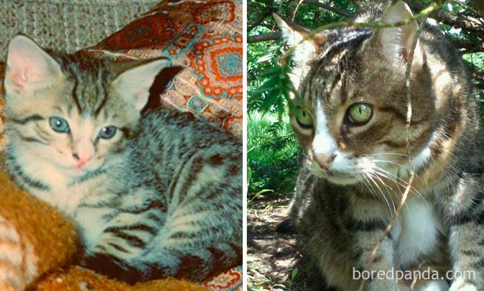 About 6 Weeks Old In 1993 And At 18 Years Old In 2011. Unfortunately, About 2 Months Later, He Passed Away
