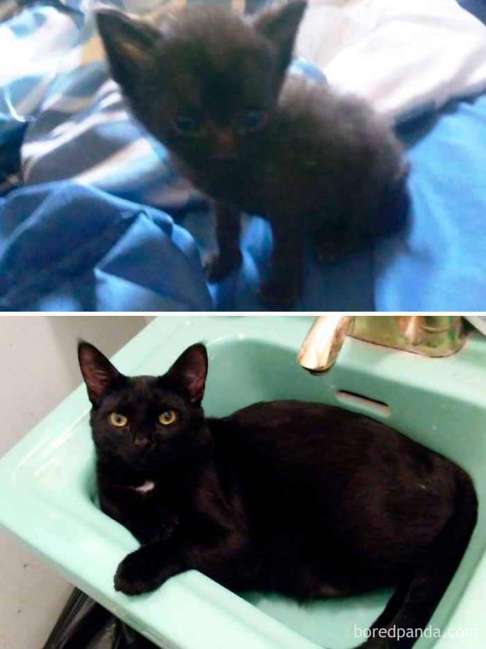 Jelly Bean In August 2016 And In August 2017