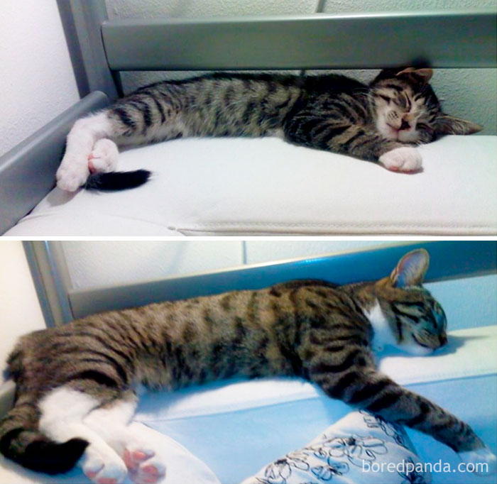This Is What Happens To A Kitty When You Pour Love All Over It For 6 Months