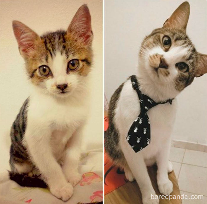 Muffin. 2 Months – 3 Years