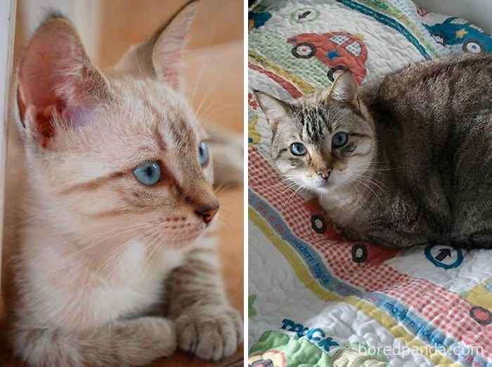 """""""Frank"""" (Blue Eyes) Sinatra – 2009 And 15,5 Pounds 2017"""