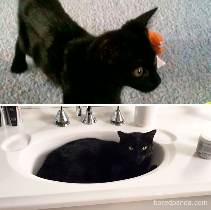 Onyx At 10 Weeks, A Skinny Little Kitten And Now At 7 Years A Lazy And Plump Princess
