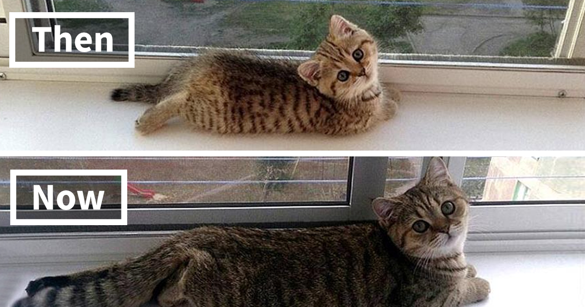332 Before-And-After Photos Of Cats Growing Up | Bored Panda