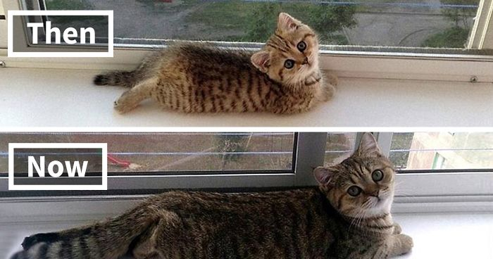 4417593019721 332 Before-And-After Photos Of Cats Growing Up