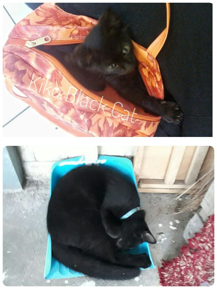 When He Is A Month (Fit In A Pouch) And Now 6 Months (Roll In Dustbin)