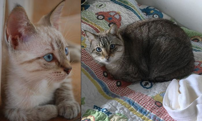 """""""Frank"""" (Blue Eyes) Sinatra - 2009 And 15.5 Pounds 2017"""