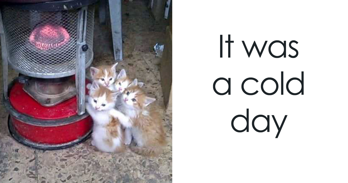 10+ Cats Who Love Warmth More Than Anything