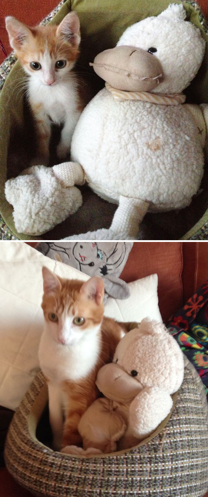 Teddy And The Duck - 2 Years On