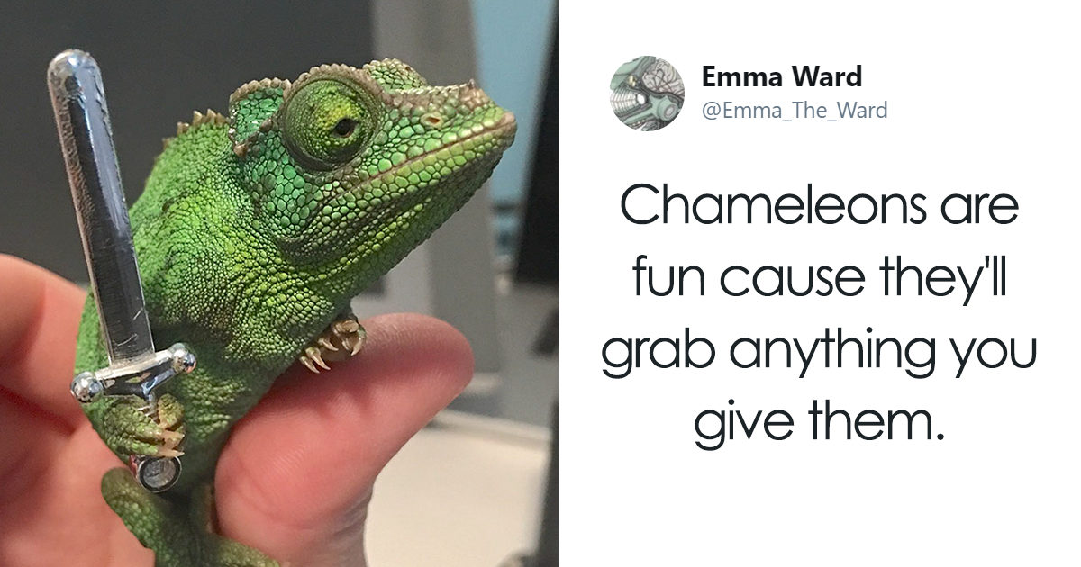 Someone Just Noticed That Chameleons Will Hold Onto Anything You Give Them, And It?s Hilarious