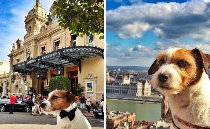 Puppy Explored 24 Countries And Is Hungry For More