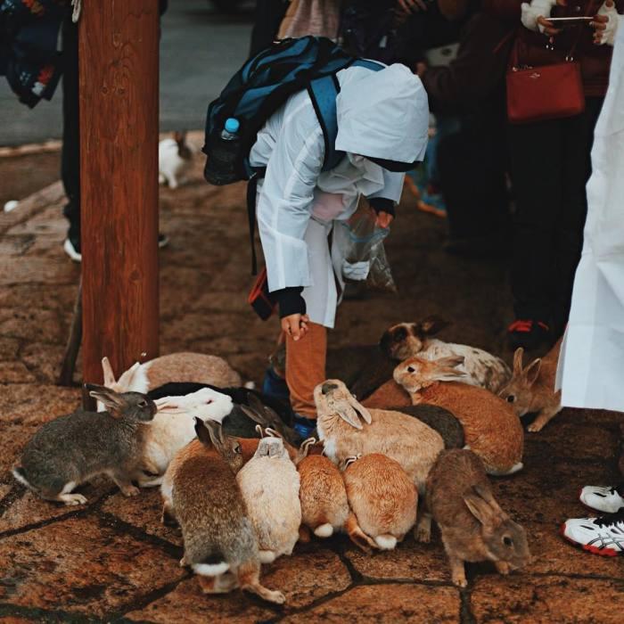 Okunoshima, Rabbit Island In Japan