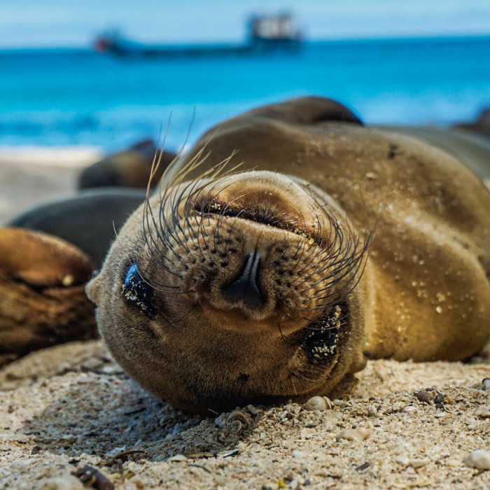 I Photographed Sea Lions In The Galápagos, And There's A Reason People Call Them The Puppies Of The Sea (Part 2)