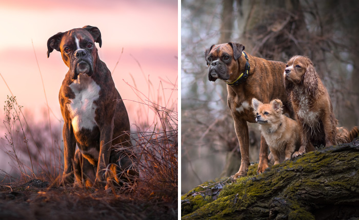 I'm Passionate About Dog Photography