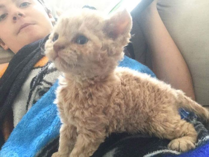 These Curly Cats Who All Descended From One Shelter Kitty Are Taking