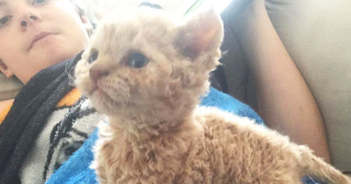 Curly Cats Are The Internet's Latest Obsession, And They All Descended From One Shelter Kitten