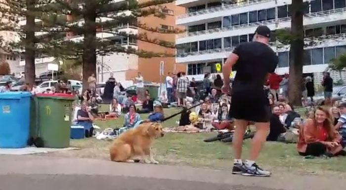 disobedient-dog-plays-dead-park-australia-kristen-bohlsen-1