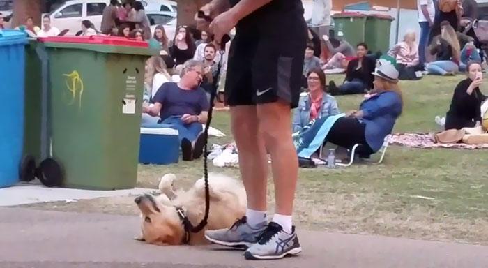 disobedient-dog-plays-dead-park-australia-kristen-bohlsen-2
