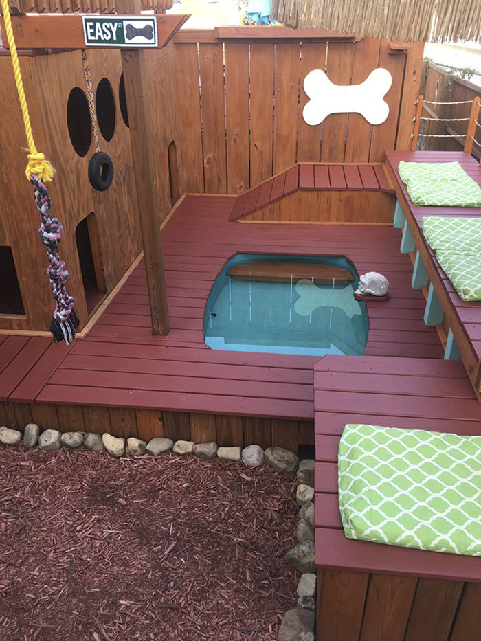 Dog Owner Transforms His Backyard Into A Large Playground