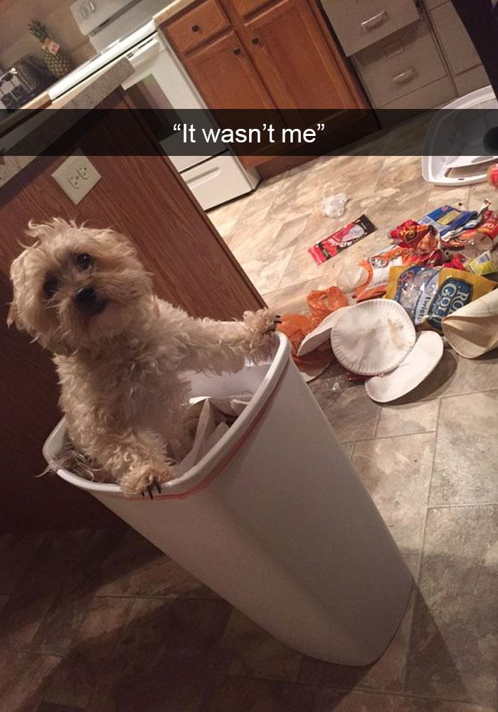 Dog-snapchats