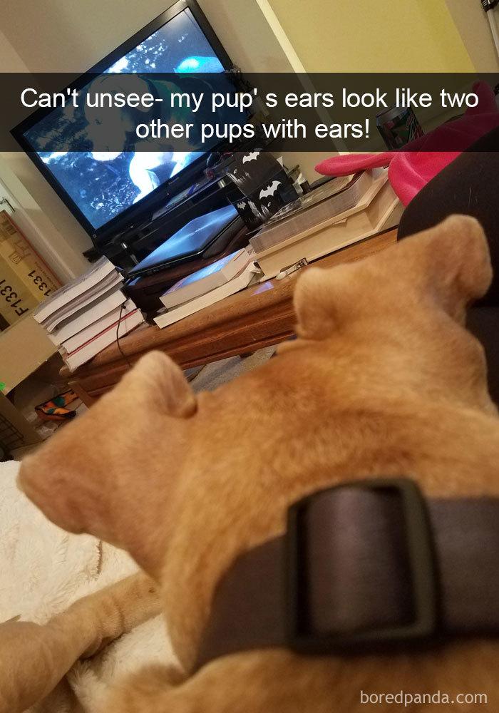Dog Snapchat