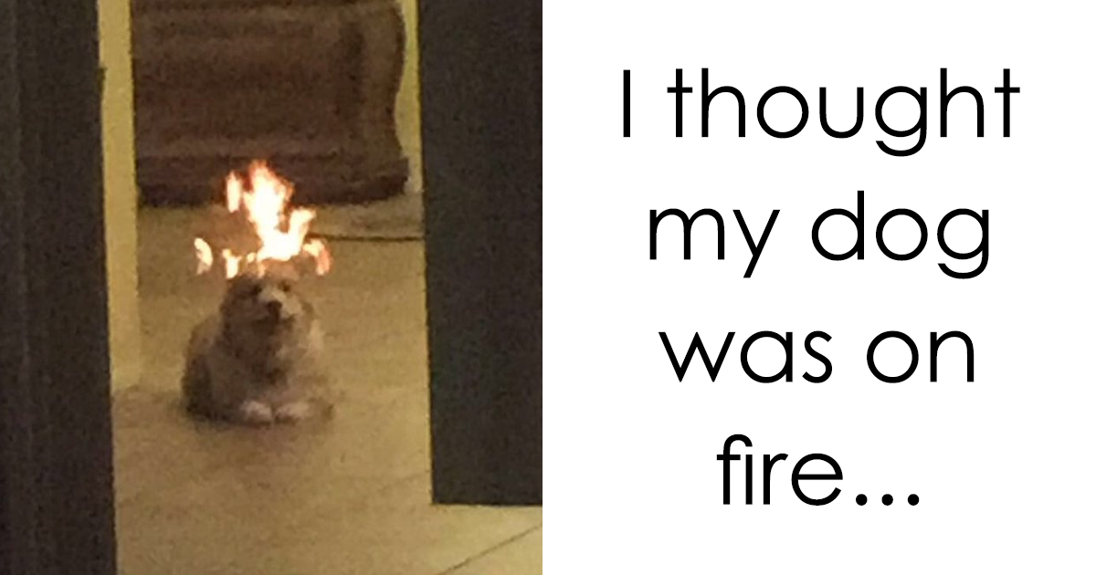 30+ Hilarious Dog Snapchats That Are Impawsible Not To Laugh At (Part 3)