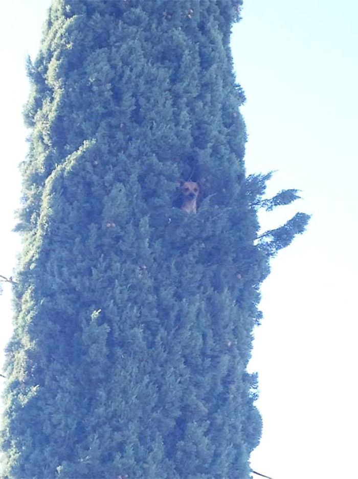 This Little Cutie Petra Stuck In A Tree About 45 Feet Tall