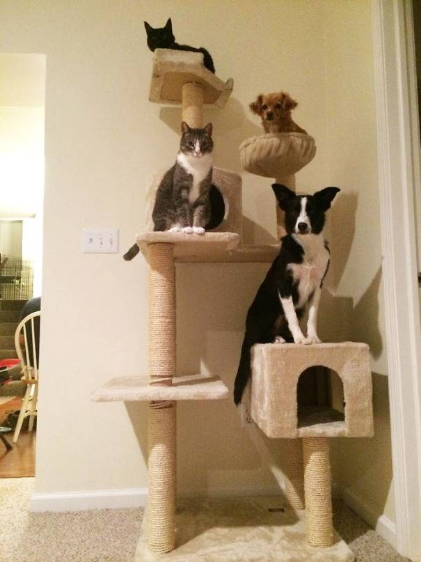"""It Rained Cats And Dogs And Now A """"Cats And Dogs"""" Tree Grew"""