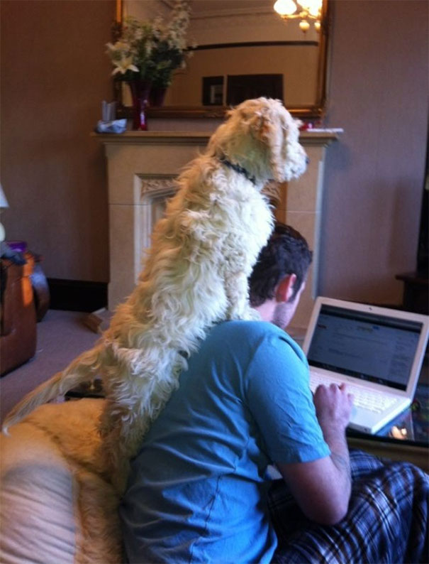 Dogs Can Be Equally As Intrusive As Cats