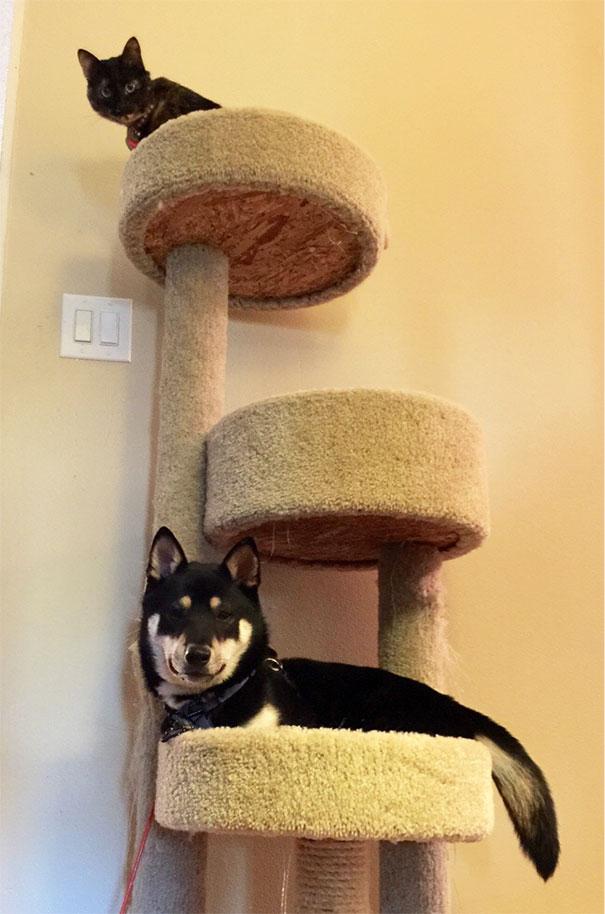 Cato Has Forgotten How To Dog